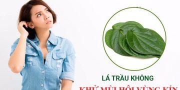[Giải đáp] Khử mùi hôi vùng kín bằng lá trầu không có hiệu quả không?